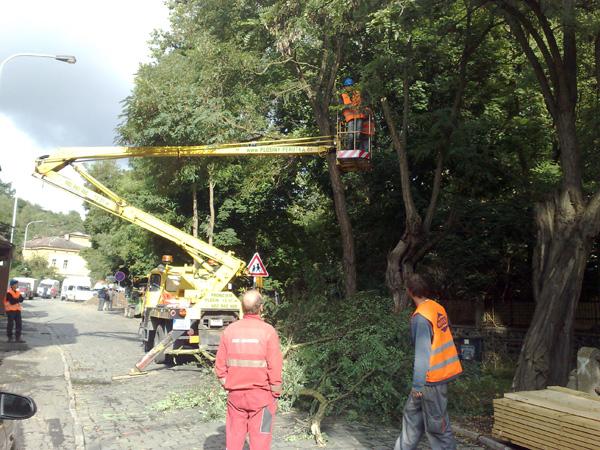 Prořezy větví a kácení stromů